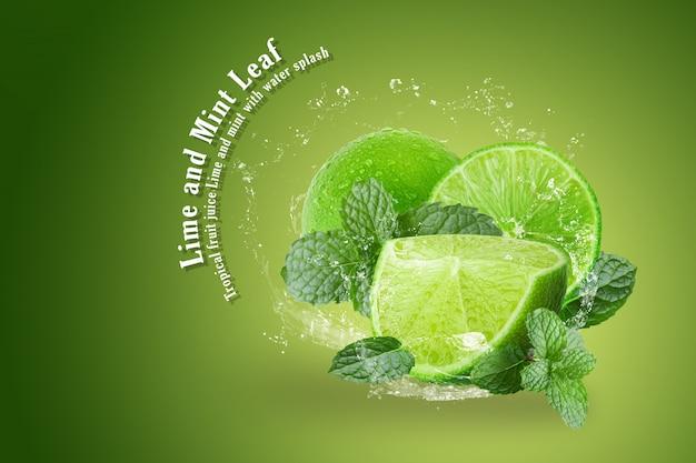 Lima y menta con salpicaduras de agua aisladas sobre fondo verde