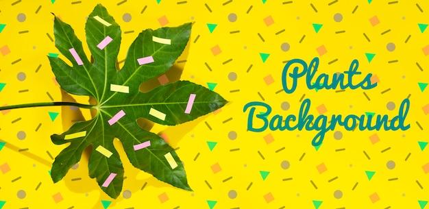 Maqueta de plantas con maquetas de diferentes formas