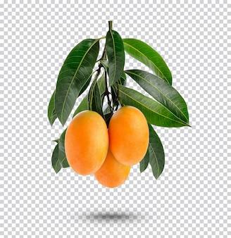 Marian plum met bladeren geïsoleerd premium psd
