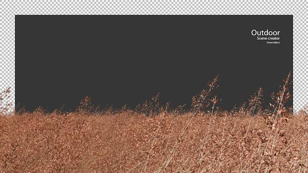 Melinis repensrose natal grasveld
