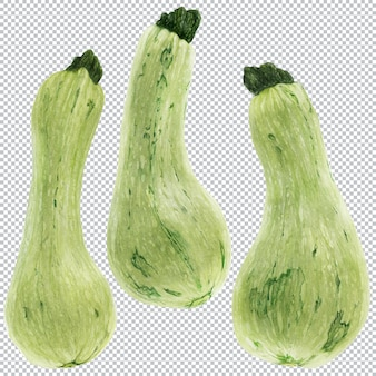 Merg. aquarel botanische illustratie van drie groene vruchten