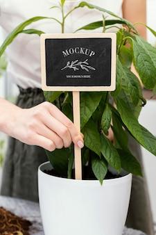 Mock-up voor het planten van binnenvegetatie