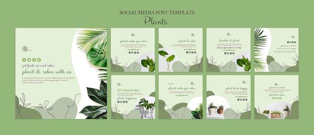 Modello di post sui social media di piante