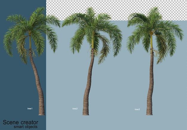 Mooie 3d-weergave van bomen geïsoleerd