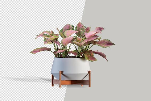 Mooie plant 3d-rendering geïsoleerd