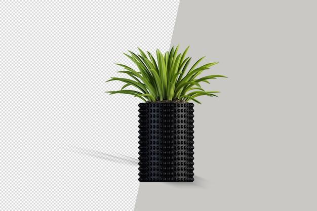 Mooie plant in 3d-rendering geïsoleerd