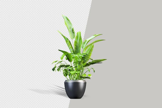 Mooie potplant in 3d-rendering geïsoleerd