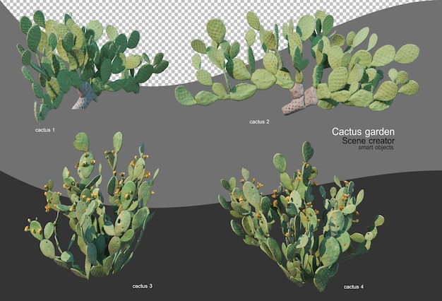 Mooie verscheidenheid aan cactustuin