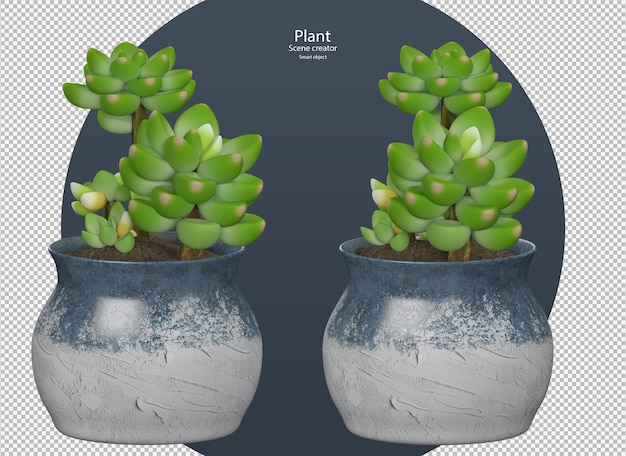 Mooie verschillende kleuren van echeveria plant geïsoleerd uitknippad