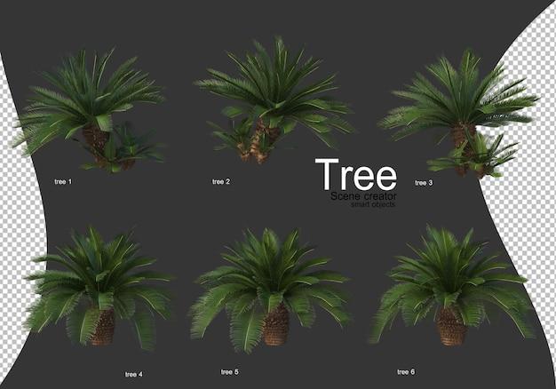 Mooie verschillende soorten bomen geïsoleerd