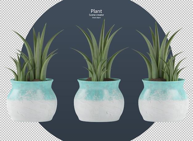 Mooie verschillende soorten planten in pot geïsoleerd uitknippad