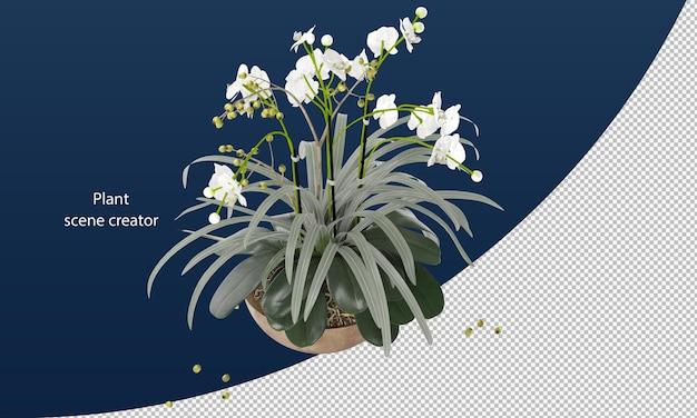 Mottenorchidee in pot voor decoratie geïsoleerd teruggeven