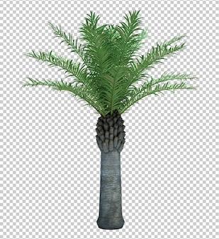 Natuur object boom geïsoleerd