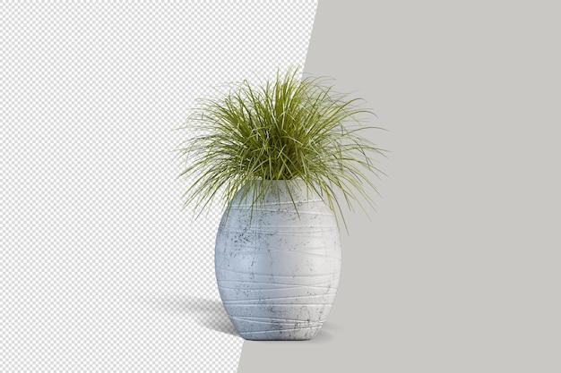 Natuur object boom plant geïsoleerd