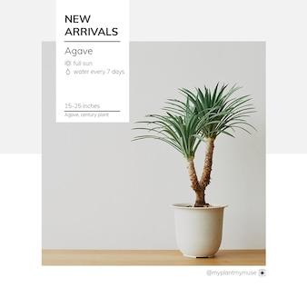 Nieuw binnengekomen sjabloon psd met agaveboom