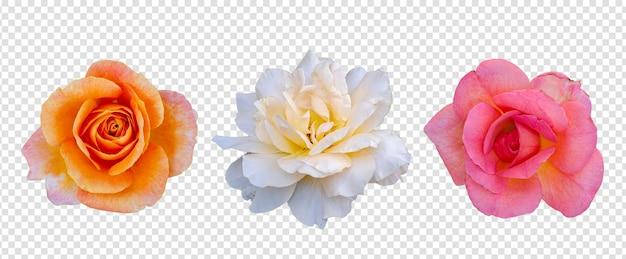 Objeto de flor con fondo transparente psd