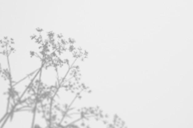Ombre erbe selvatiche e fiori su un muro bianco
