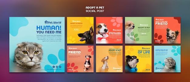 Pacchetto di post di instagram per l'adozione di animali domestici con animali