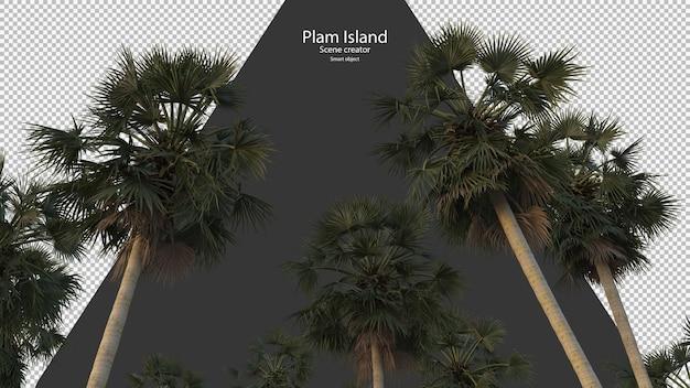 Palmboom opzoeken weergave geïsoleerd