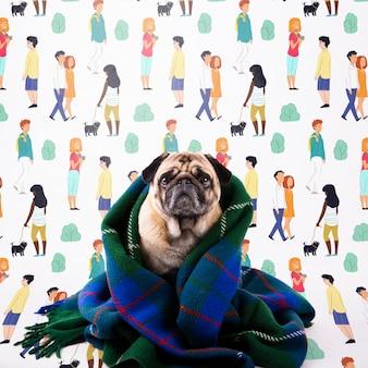 Perro doméstico cubierto con una manta