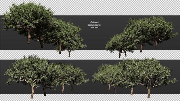 Perzikboom geïsoleerd perzikboom uitknippad perzikboom perspec