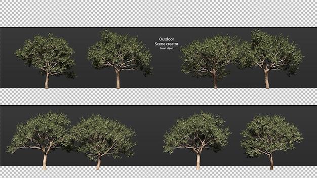 Perzikboom geïsoleerd perzikboom uitknippad perzikboom perspectief