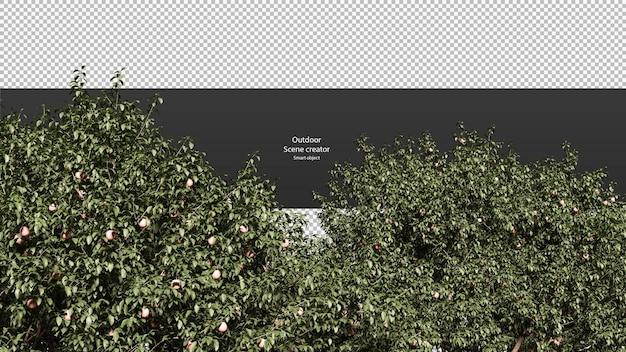 Perzikboom geïsoleerde perzikboom uitknippad boomtop