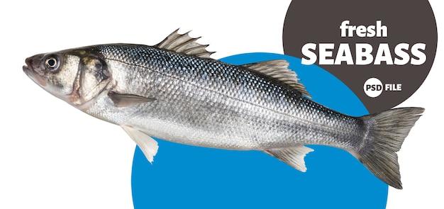 Un pescado fresco de lubina aislado sobre fondo blanco.