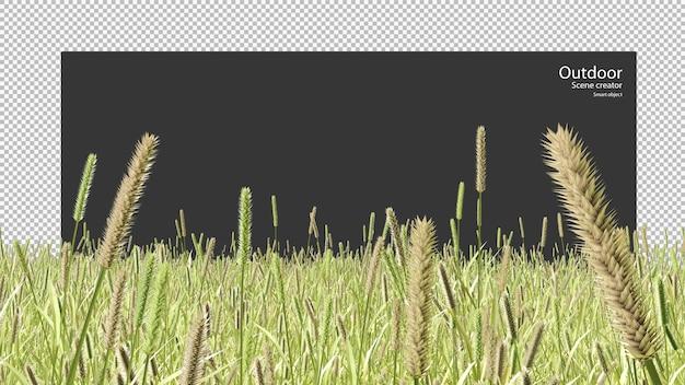 Phleum bertoloniikleistaartbladig meerjarig grasveld Premium Psd
