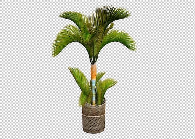 Plant geïsoleerd op witte achtergrond