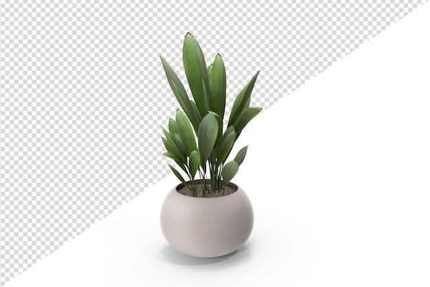 Plant geïsoleerd