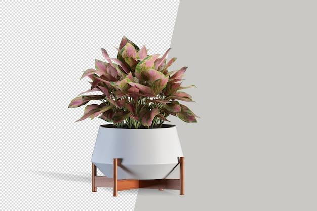 Plant in 3d-rendering geïsoleerd Premium Psd