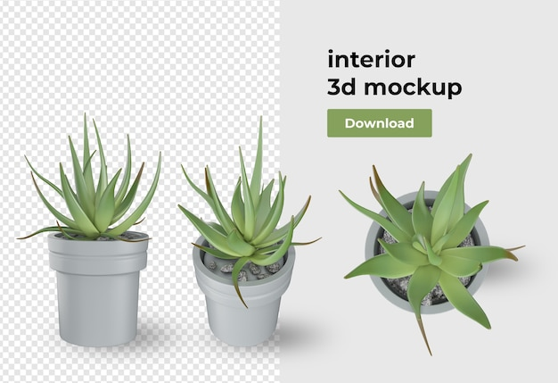 Plant in potdecoratie en interieur geïsoleerd