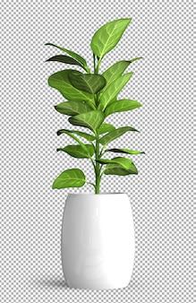 Planta aislada en maceta