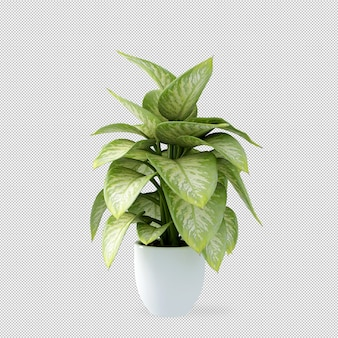 Planta en maceta en render 3d
