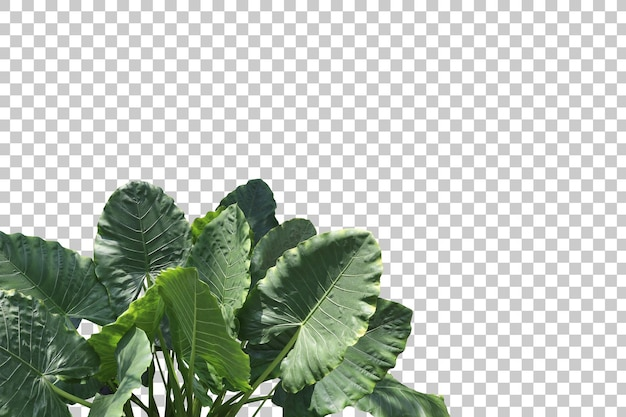 Plantas de árboles tropicales aisladas
