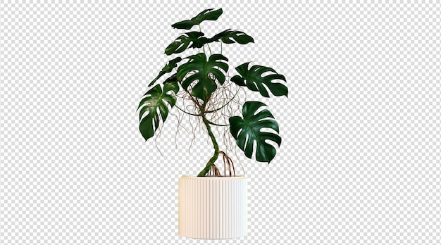 Plantas blancas en macetas y de hojas anchas