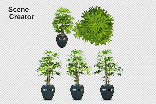 Plantas en macetas en 3d rendering aislado