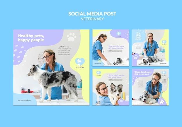 Plantilla de publicaciones de instagram de clínica veterinaria