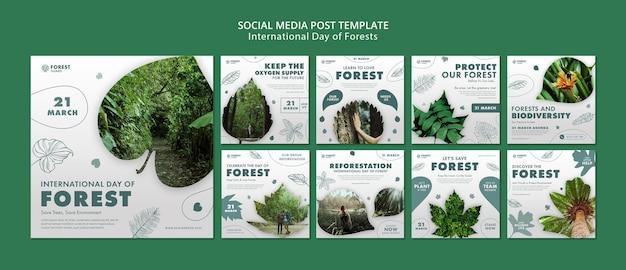 Plantilla de publicaciones de instagram del día de los bosques con foto
