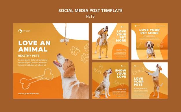 Plantilla de publicaciones de instagram de tienda de mascotas