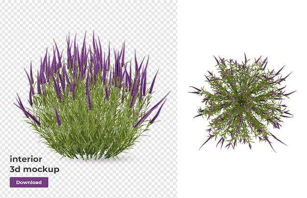 Plantmodel in 3d-weergave