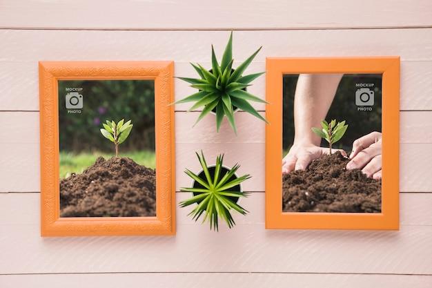 Plat leggen van rechthoekige frames op houten achtergrond met vetplanten