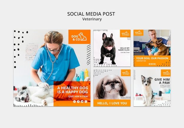 Posta di social media con modello veterinario