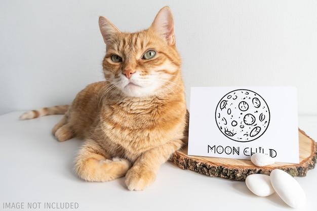 Postal de maqueta rústica de gato de jengibre. tarjeta horizontal con guijarro blanco en maqueta de fondo de mesa blanca. lindo animal doméstico con espacio para su imagen o texto.