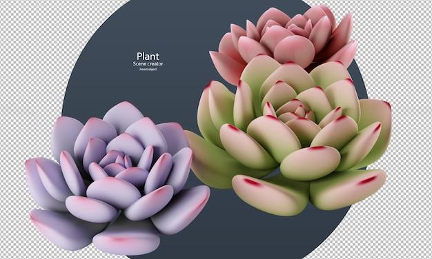 Prachtige verschillende kleuren van echeveria plant geïsoleerd uitknippad