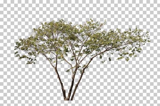 Primer plano de árbol verde realista aislado