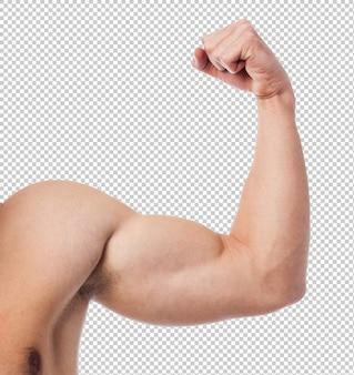 Primo piano di un corpo di forma fisica di forza sopra bianco