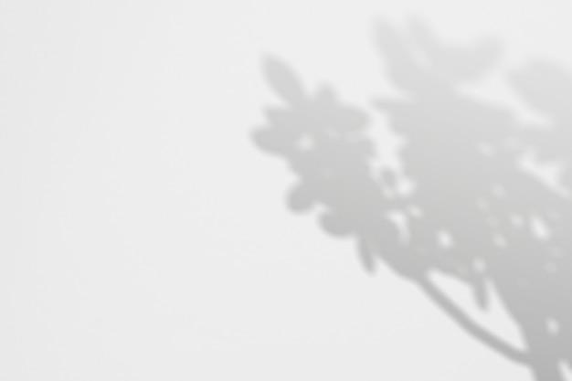 Priorità bassa di estate dell'albero tropicale delle ombre su una parete bianca