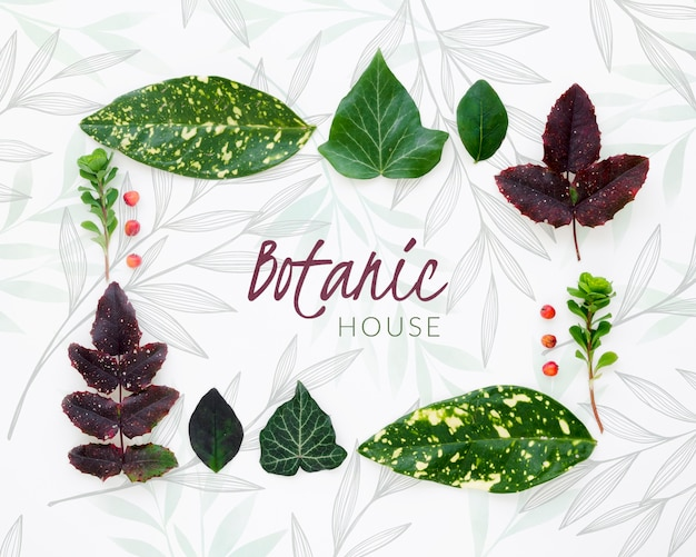 Raccolta di foglie botaniche vista dall'alto